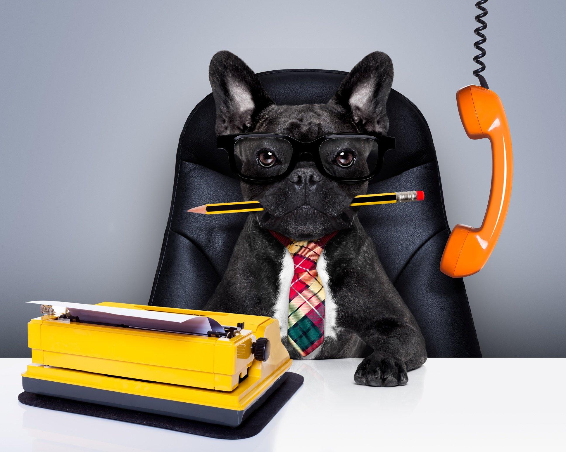 Dog dressed as boss