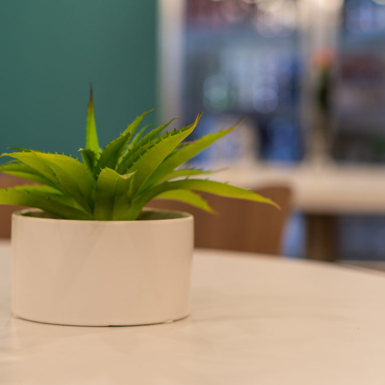 Office plants like this one reduce employee stress.